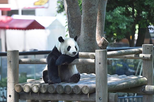 <p><b>上野動物園</b></p>