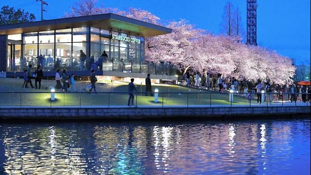 視覺與味覺的饗宴! 「全球最美」星巴克 櫻花樹下喝咖啡超浪漫