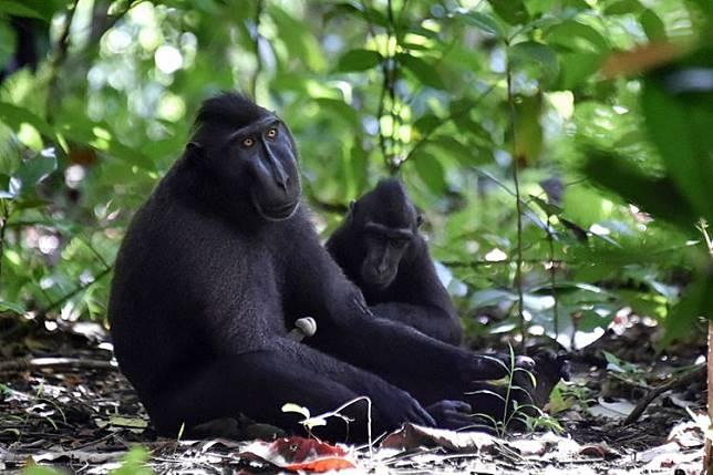 Laboratorium Alam Terbesar di Dunia Ada di Indonesia