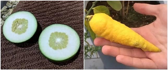 9 Potret buah dengan bentuk tak lazim, bikin bingung