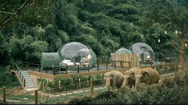 在雨林裡看大象、住泡泡,不一樣的泰國飯店