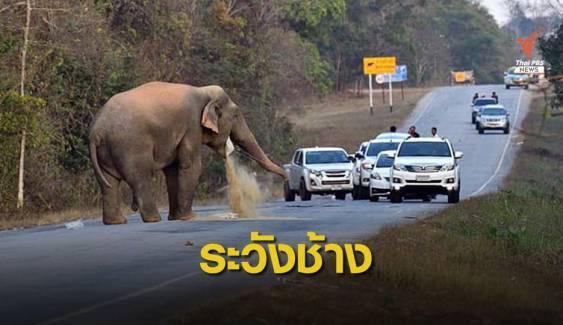 เตือนขับรถผ่านป่าเขาอ่างฤาไน ระวังช้างขวางรถ-รื้อค้นสิ่งของ