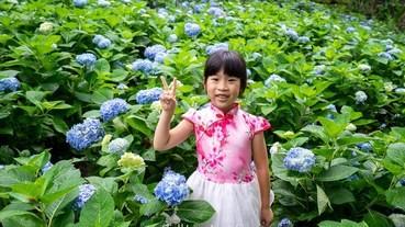 2019台中新社景點【沐心泉休閒農場】金針花.繡球花.怎麼去