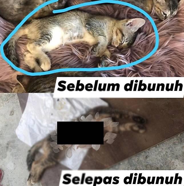 Facebook Persatuan Hewan Malaysia- Malaysia Animal Association.