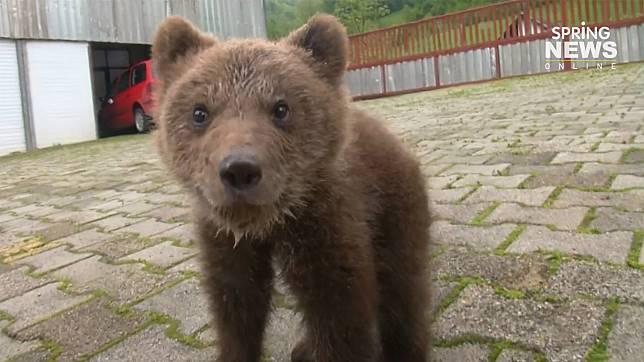 """ชาวบ้านรับเลี้ยง """"ลูกหมีน้อย"""" หลังชอบมาหาอาหารที่หมู่บ้านในบอสเนีย"""