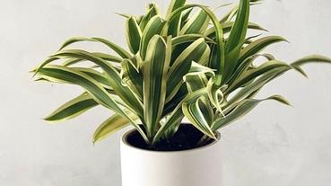 室內盆栽、盆景選購指南!這3款不但能淨化空氣還能開運