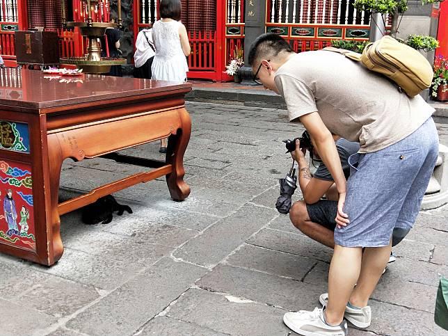 寵毛趴趴走/龍山寺有黑貓 外國遊客大呼好可愛!