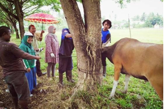 Pemeriksaan sapi di Kabupaten Gorontalo (KOMPAS.com/Kesmavet Gorontalo)   Artikel ini telah tayang di Kompas.com dengan judul