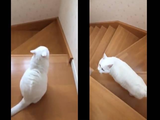 曾目睹貓奴兩度跌落樓梯 暖心主子主動帶路頻回頭查看!