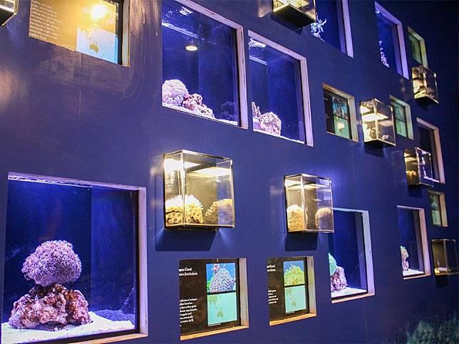 去到夏威夷想進行靜態活動,亦可選擇探訪已經有超過一百年歷史嘅威基基水族館。(互聯網)
