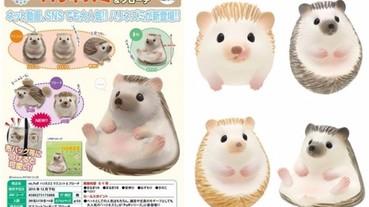 日本推出刺蝟扭蛋 每天看牠露出肚皮超療癒!