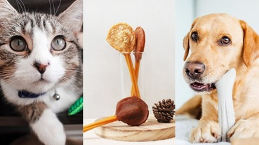 寵物潔牙骨推薦!餵食時間、選購要點大公開,讓毛孩口腔更健康