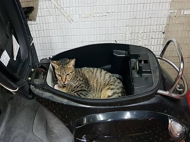 影/曬個車箱卻被浪貓強佔 車主勸說竟轉身躺好躺滿!