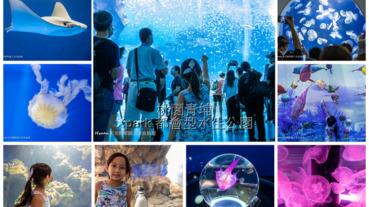 桃園青埔最新親子景點 XPARK水族館 2020/8/7正式開幕 8/8實際看過之後的評價分享