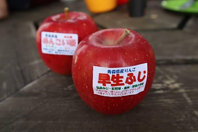 我來時園中可採的蘋果有「早生富士」、「可愛公主」及「津輕」及等早生品種。(劉達衡攝)