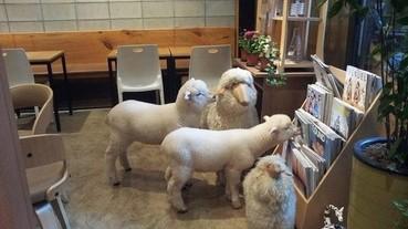 萌翻!韓國「羊咩咩」咖啡廳讓少女們崩潰啦!