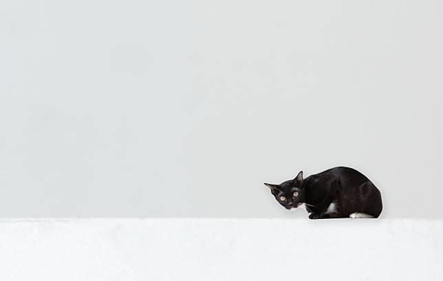 มอง แมว เมือง