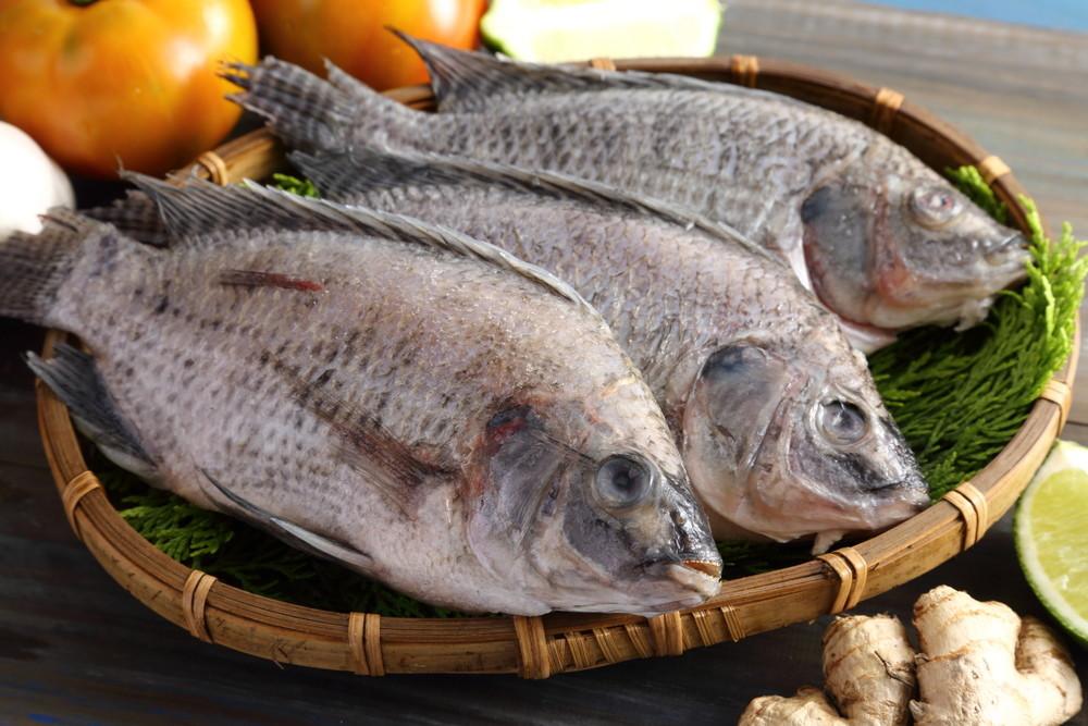 【上野物產】嚴選台灣鯛魚 ( 250g土10%/隻 ) 24隻組