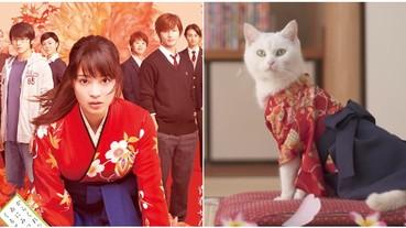 《花牌情緣》漫畫改編電影就要上映,片商推出「貓咪版預告」萌翻大票粉絲!