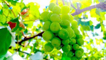 2019年最新!盤點日本期間限定葡萄甜點~秋天來日本就是要吃葡萄!