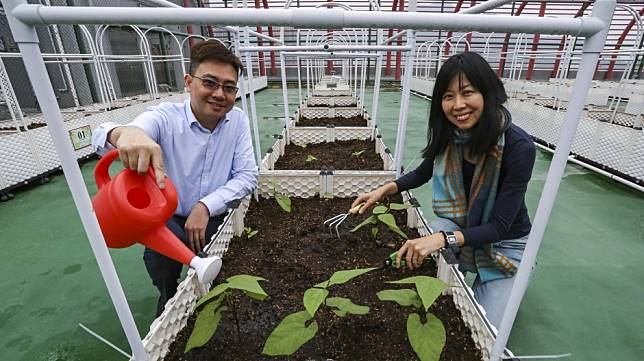 Hong Kong industrial building champions green spirit by funding rooftop farming through recycled cardboard