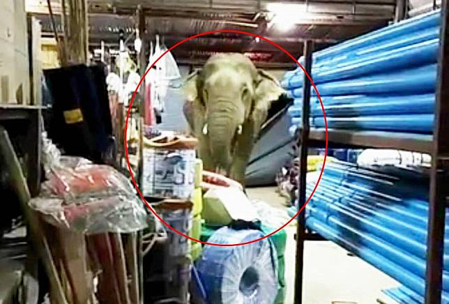 นาทีระทึก!  'ช้างป่าละอู' พังประตูร้านค้าซ้ำสองติดใจรสชาติทุเรียน