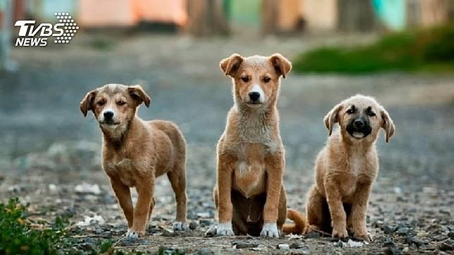 許多人喜歡飼養狗狗當寵物。(示意圖/TVBS)
