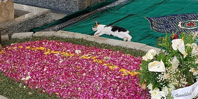Kucing tidur di dekat pusara Gus Sholah (Beritajatim.com)