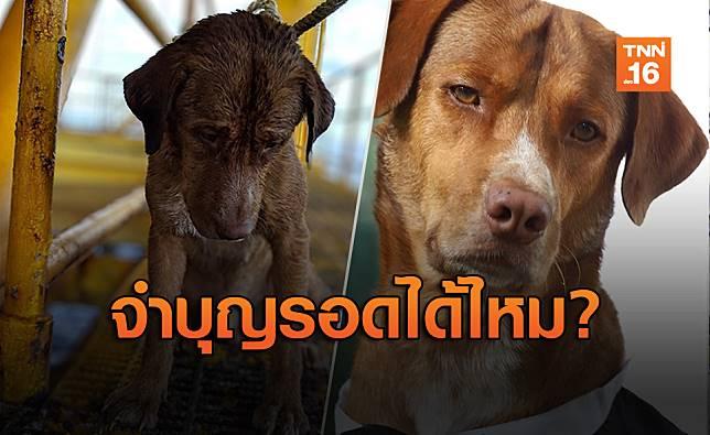 """เปิดภาพ """"บุญรอด"""" หมาลอยคอกลางอ่าวไทย ตอนนี้ชีวิตดี๊ดี"""