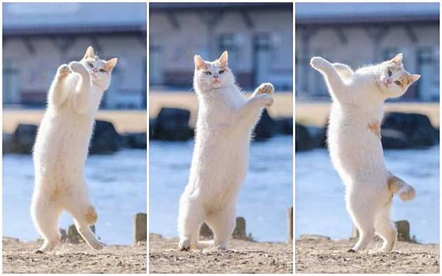 貓奴們集合囉!日本2月22日歡慶「貓之日」,快來一起曬自家貓咪萌照 ...