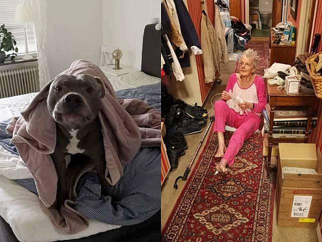 老奶奶因偏見討厭鄰居比特犬 意外被救一命立刻大改觀!