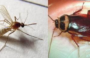 蚊子怕辣、蟑螂怕香,這5招讓它們在家裏絕跡!