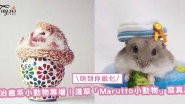 治癒系小動物專場!淺草「Marutto小動物」寫真展,萌照一定讓你融化〜