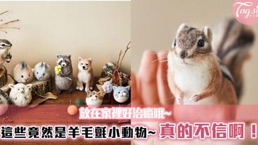這些竟然是羊毛氈小動物~真的不信啊!一隻隻毛絨絨小動物,也太逼真了!放在家裡好治癒哦~