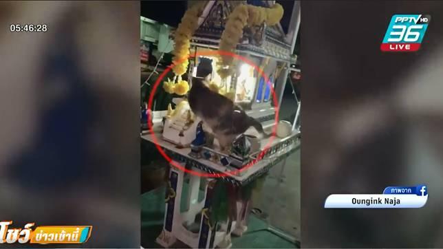 เจ้าของแมว โพสต์คลิป แมวหายไปในศาลพระภูมิ
