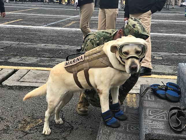 10歲搜救犬光榮退休 終於卸下裝備換上玩具享受幸福狗生!