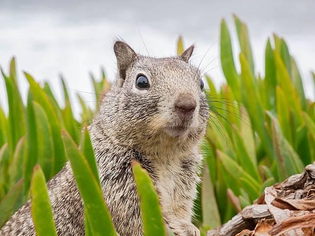 ▲松鼠有著水汪汪大眼超可愛。(圖/翻攝 pixabay )