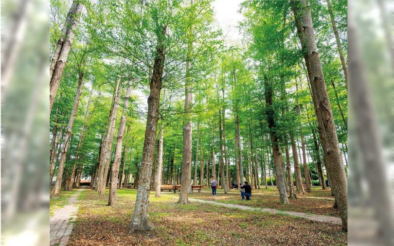 種植了一整片小葉欖仁的「溪美社區森林公園」,吸引許多遊客駐足拍照。(圖/宋岱融攝)