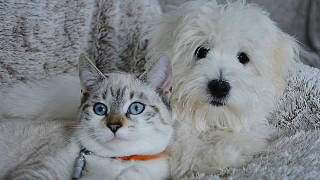 46+ Anjing dan kucing dilempar terupdate