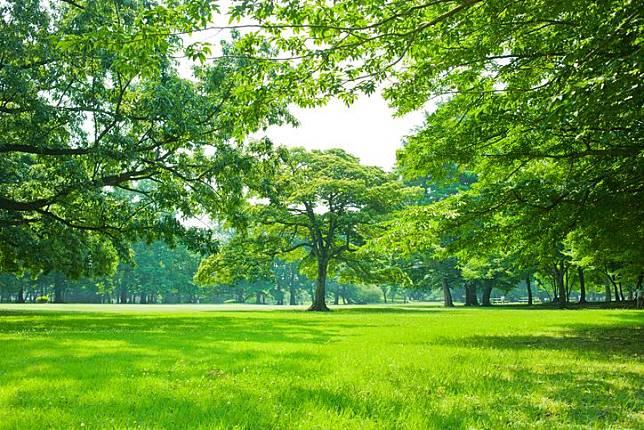 Hasil gambar untuk hutan