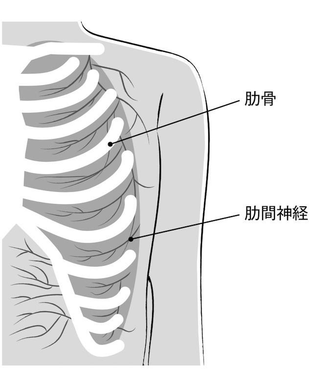 ピーク 肋骨 骨折 痛み
