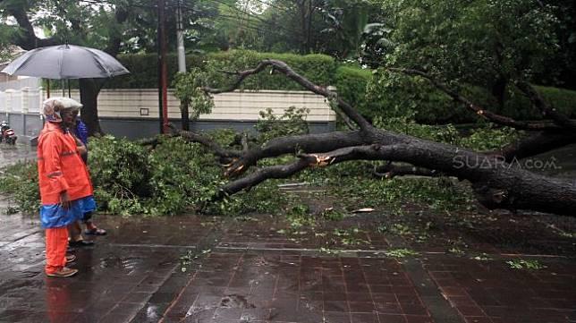 Petugas melihat pohon roboh di depan rumah dinas Gubernur DKI Jakarta Anies Baswedan Jalan Taman Suropati, Jakarta, Selasa (25/2). [Suara.com/Oke Atmaja]
