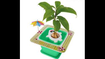 敲口愛種子盆栽套件,種植物也能和養動物一樣療癒