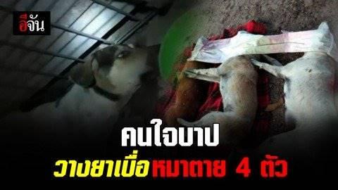อาจารย์สาวโร่แจ้งความ ตร. ตามหาคนร้ายวางยาเบื่อสุนัขตายเกลี้ยง 4 ตัว