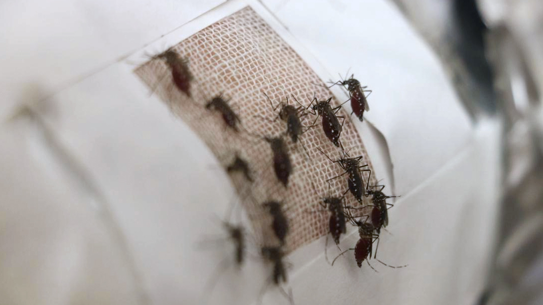 加入「石墨烯」所織成的衣服,將是防蚊子的最佳利器?!