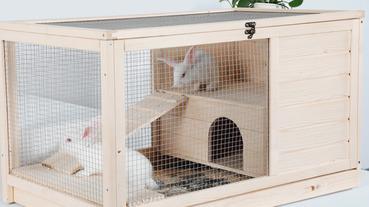 兔子飼養新手必看!養兔子花費、養兔子重點大公開