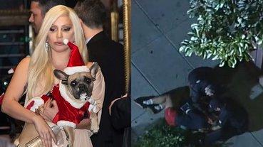 嚇壞歌迷!Lady Gaga 遛狗員當街被歹徒槍擊偷犬,天后傷痛願出 1369 萬贖狗!
