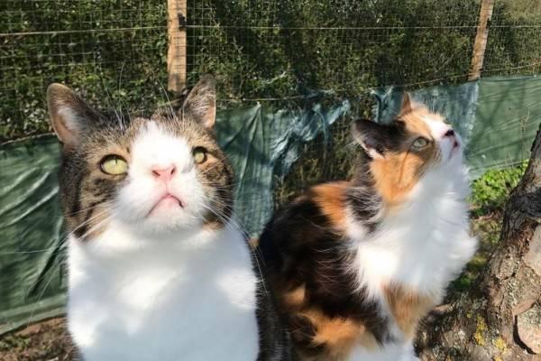 10 Akun Instagram Kucing Berkebutuhan Khusus yang Wajib Kamu Follow!