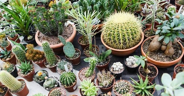 5 Tips Merawat Tanaman Kaktus Hias