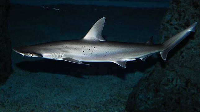 98 Koleksi Gambar Ikan Hiu Untuk Anak Sd HD Terbaru